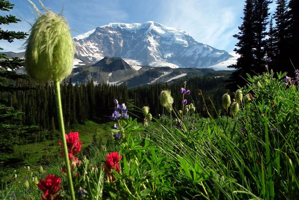 Died and Gone to Mt Rainier_Chad Maurer_