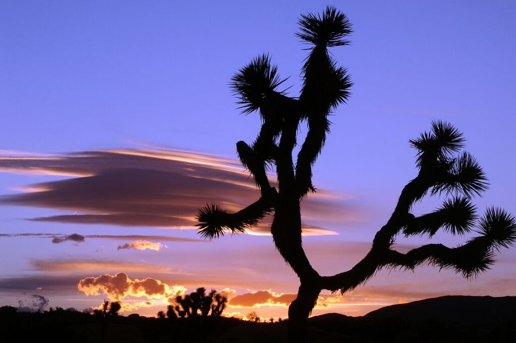joshua_tree_sunset_palm_springs