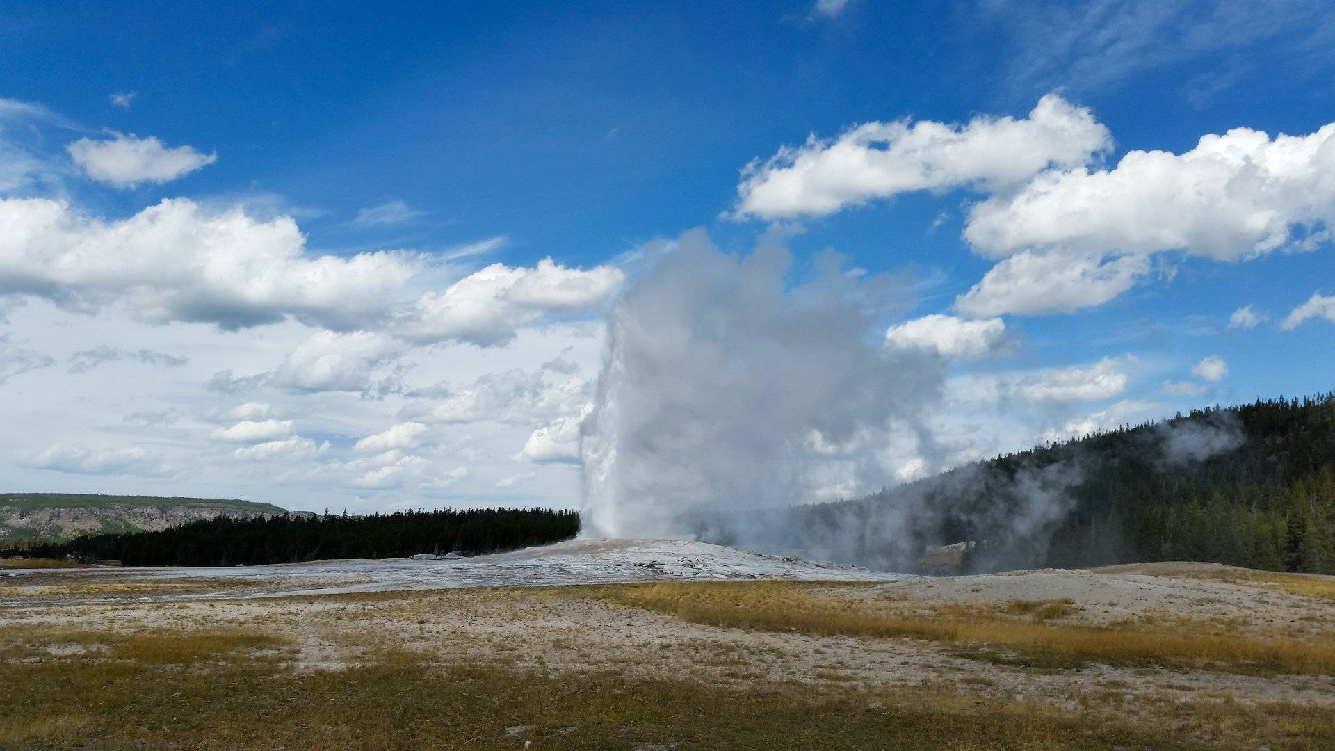 T Yellowstone Dineke 2